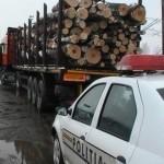 13,7 metri cubi de material lemnos fără acte de proveniență confiscați de polițiști