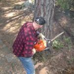 Tânăr cercetat de polițiștii din Abrud pentru infracţiuni silvice supă ce a tăiat șase arbori din pădurea statului