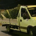 Bărbat din Alba Iulia surprins în trafic la Abrud în timp ce conducea o autoutilitara încărcată cu brazi de Crăciun tăiați ilegal