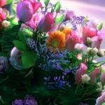 Obiceiuri, superstiţii și tradiții de Florii: Ramurile de salcie sunt așezate înainte de culcare sub pernele fetelor nemăritate | abrudinfo.ro
