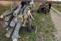 Bărbat de 61 de ani din Deva cercetat penal după ce a tăiat fără drept mai mulți arbori la Bucium