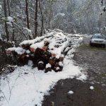 Peste 280 de metri cubi de material lemnos au fost confiscaţi de poliţişti în urma unor controale efectuate, împreună specialişti silvici, pe raza comunei Mogoş
