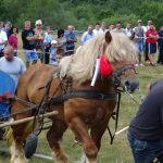 Cei mai frumoși și puternici cai din zona Munților Apuseni, prezenți la cea de-a IV-a ediție a concursului hipo de la Abrud