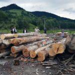 Aproape 22 de metri cubi de material lemnos au fost confiscaţi de poliţişti, în urma unui control efectuat la o societate comercială din Abrud