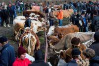 Nemulțumit de situația din agricultura românească, un fermier din Abrud a vândut tot ce avea și a plecat la muncă în străinătate
